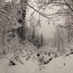Abkürzung durch den Wald © Gipfelfieber.com