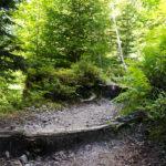 Der Weg durch den Wald ist gut zu finden © Gipfelfieber.com