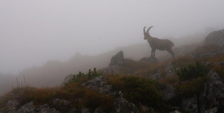 Auf die Benediktenwand bevor der Winter kommt © Gipfelfieber.com