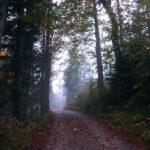 Der Wald erwacht © Gipfelfieber.com