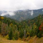 Die Bäume strahlen in bunten Farben © Gipfelfieber.com