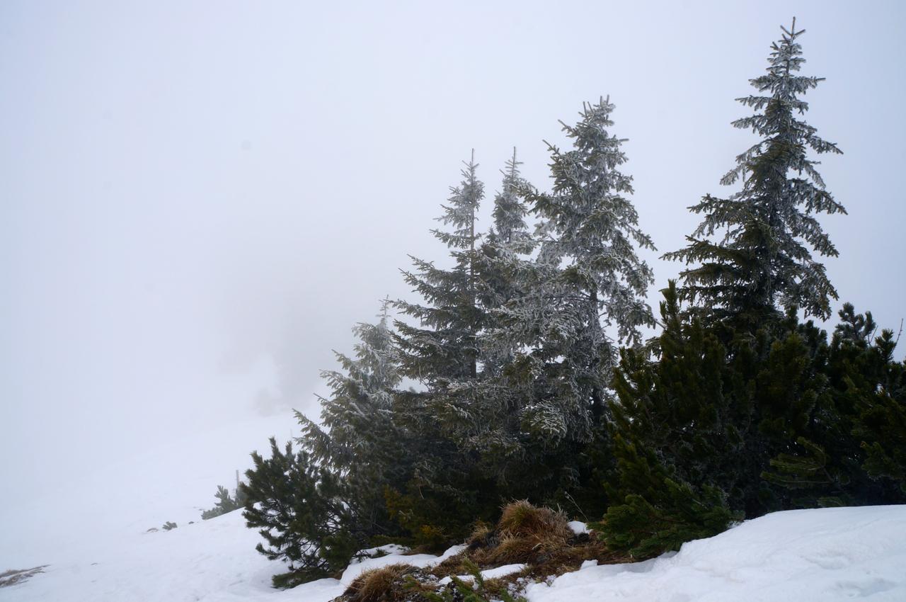 Richtiger Winter sieht anders aus © Gipfelfieber.com