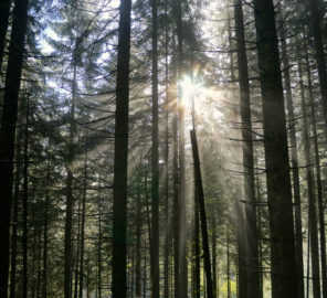 Mystische Stimmung im Wald © Gipfelfieber.com