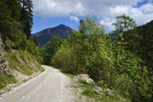 Die Forststraße © Gipfelfieber.com