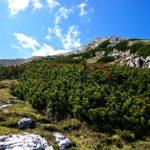 Latschen säumen den Weg © Gipfelfieber.com