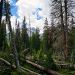 Umgestürzte Bäume im Nationalpark © Gipfelfieber.com