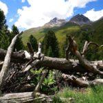 Im Arvenwald © Gipfelfieber.com