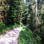 Breiter Forstweg bis zur Hütte © Gipfelfieber.com
