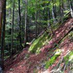 Der Steig führt zunächst durch den Wald © Gipfelfieber.com