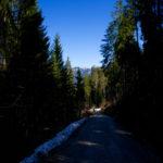 Gemächlicher Abstieg über einen Forstweg © Gipfelfieber.com