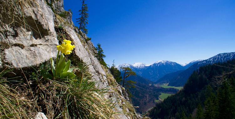 Der Hausberg von Oberammergau - der Kofel © Gipfelfieber.com