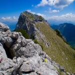 Aurikel am Grat © Gipfelfieber.com