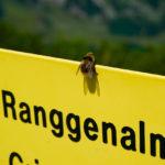 Eine Biene © Gipfelfieber.com