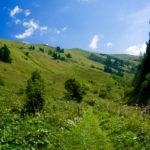 Aufstieg über Almwiesen © Gipfelfieber.com