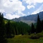 Bichlbächler Alpe © Gipfelfieber.com