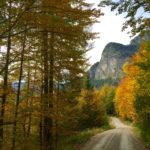 Bunte Bäume säumen den Weg © Gipfelfieber.com