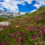 Mai: Val Loga am Splügenpass ©Gipfelfieber