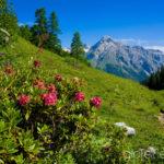 Juni: Alperschällihorn in Graubünden ©Gipfelfieber