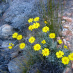 Blumen am Wegesrand ©Gipfelfieber