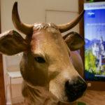 Eine Kuh darf nicht fehlen ©Gipfelfieber