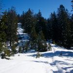 Durch die Waldschneise ©Gipfelfieber