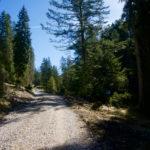 Forstweg zum Hohen Sattel ©Gipfelfieber