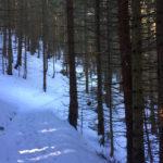 Im Wald ©Gipfelfieber