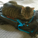 Katze mag Rucksack ©Gipfelfieber