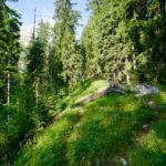 Deutlich erkennbarer Pfad im Wald ©Gipfelfieber
