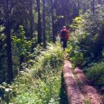 Im Wald zum Mitterkaser ©Gipfelfieber
