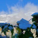 Noch grüner Ahorn ©Gipfelfieber