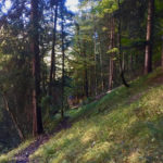 Steiler Abstieg im Wald ©Gipfelfieber