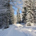 Rodelbahn im Wald ©Gipfelfieber