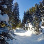 Aufstieg im Wald ©Gipfelfieber
